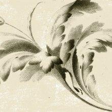 SALLEMBIER, Henri (ca. 1753-1820). [Estudio de hojas]. [ca. 1800?]